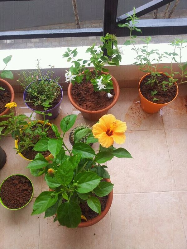 helped set up a friend's balcony garden. it blooms :)