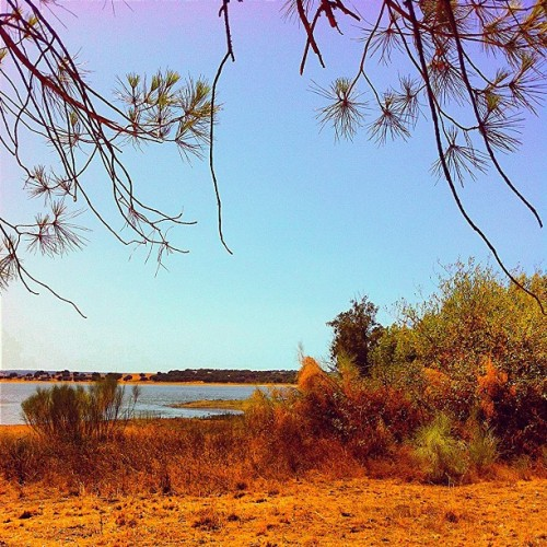 #lake #water #reservoir #trees #sky #colors #peaceful #places #fromwhere #webstagram #tagstagram #travelingram #travel #instagram #statigram #bestoftheday #bestpicoftheday #phototheday #picoftheday #ig #igers #ignation #instagood #instacanvas #instagrammers #instagramhub #summer #eavig #iphonesia #iphonephotos  (Taken with Instagram)