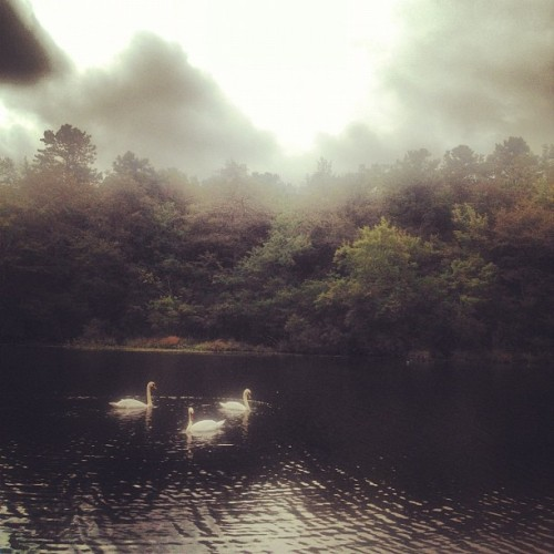 Swan lake. (Taken with Instagram)