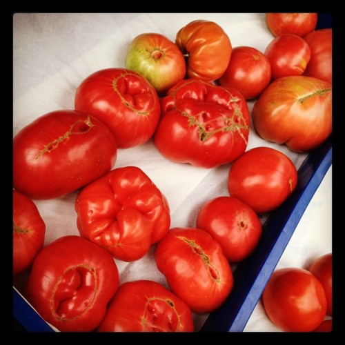 Brandywine tomatoes. So strange looking #tomatoes #brandywine #strange #fresh #ctgrown #farm #auntpatti #uncleray  (Taken with Instagram at The Farm)