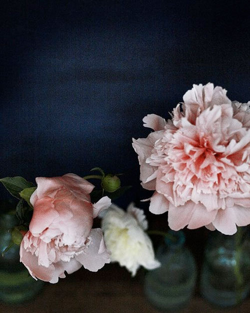 Hello in need of peonies tonight.