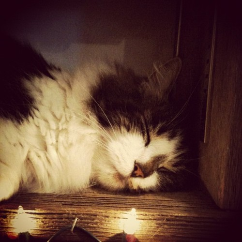 Puffy the kitty sleeping on the shelf.  (Taken with Instagram)