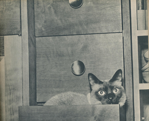 From the book Introducing Cats by Alan C. Jenkins, 1958. Source: janwillemsen on Flickr.