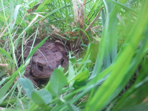 Look who's hiding in the grass.