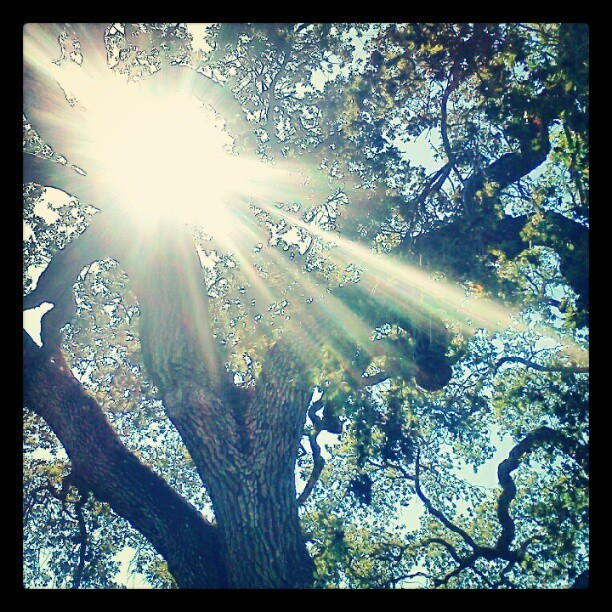 #light #sun #tree #happy #saterday #beautiful #nature (Taken with Instagram)