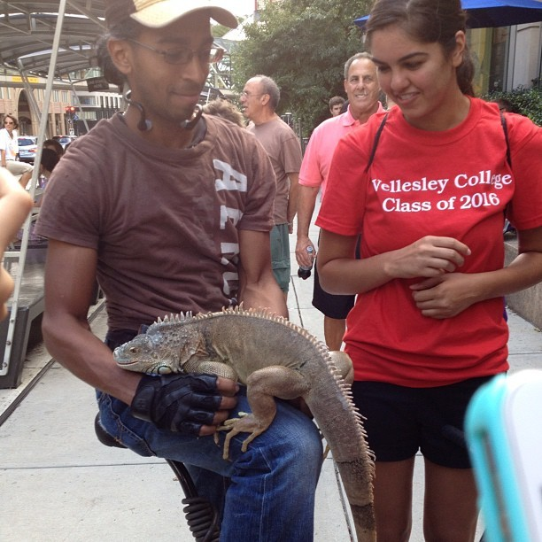 Omg an #iguana… #wellesley  (Taken with Instagram)