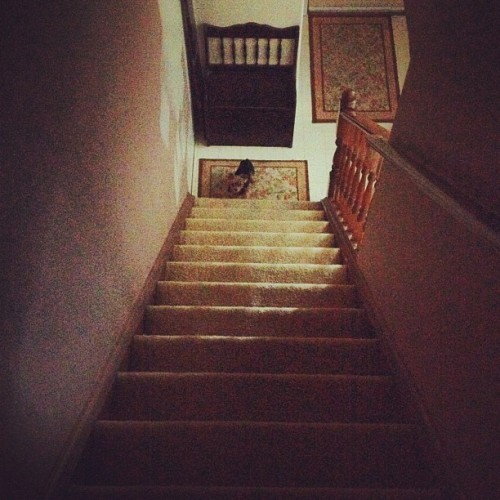 To a tiny dog, stairs are like Everest.  (Taken with Instagram)