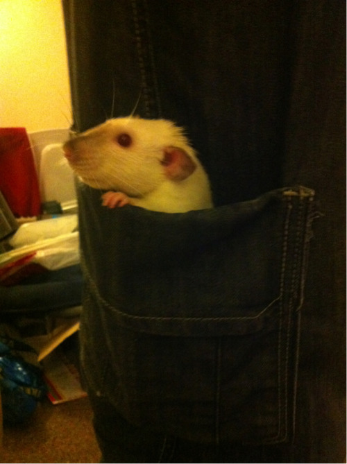 claireperson:  Pocket rat!