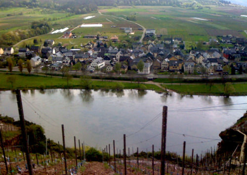 Our new riesling comes from this very steep vineyard on the Mosel. It's a lovely clean precise expression of Mosel Riesling, prefect for late summer evenings.