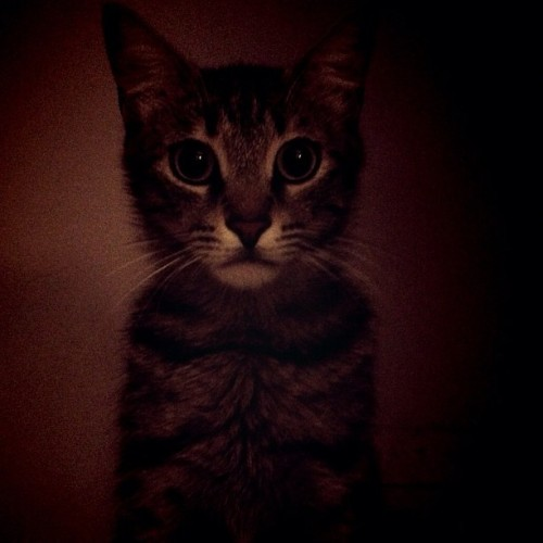 PHOTO OP: The Noble Kitty Via Acya Zeynep Yuksel.