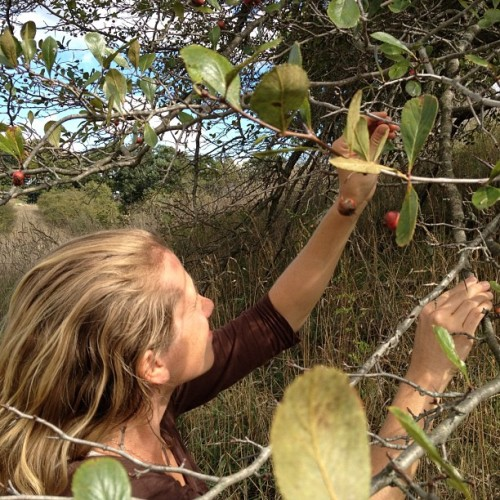 Minding her thorns. Hawthorne. #Wildcrafting #HerbalMedicine  (Taken with Instagram)