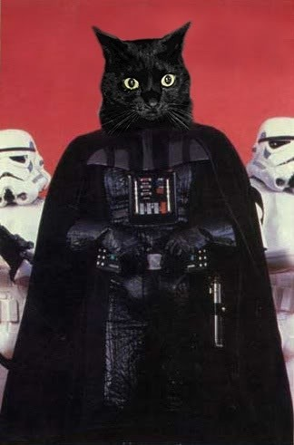 Yep. I've always believed cats could be the greatest evil in the galaxy.