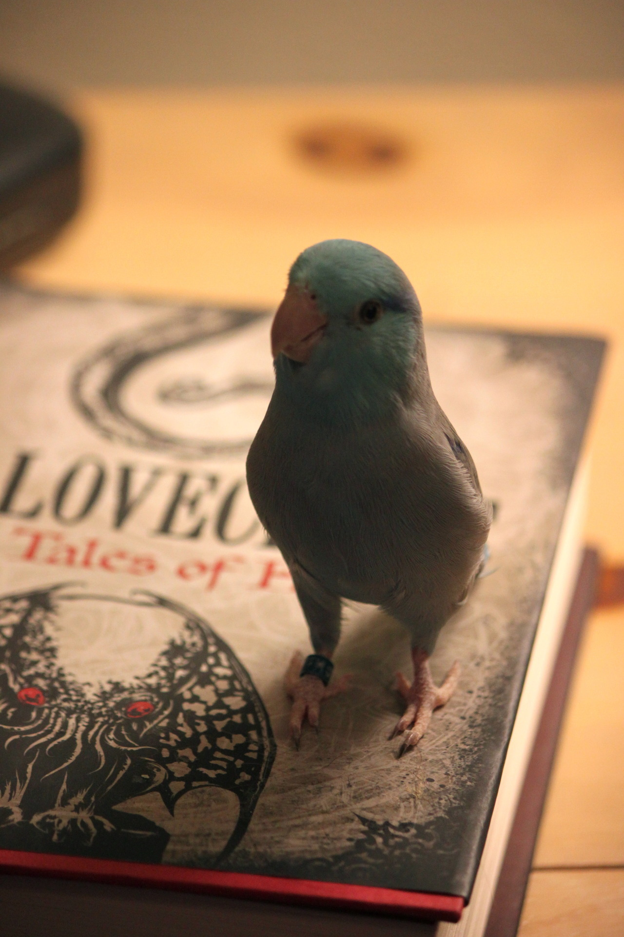 darwinthebird:  I am a Lovecraftian bird at heart.