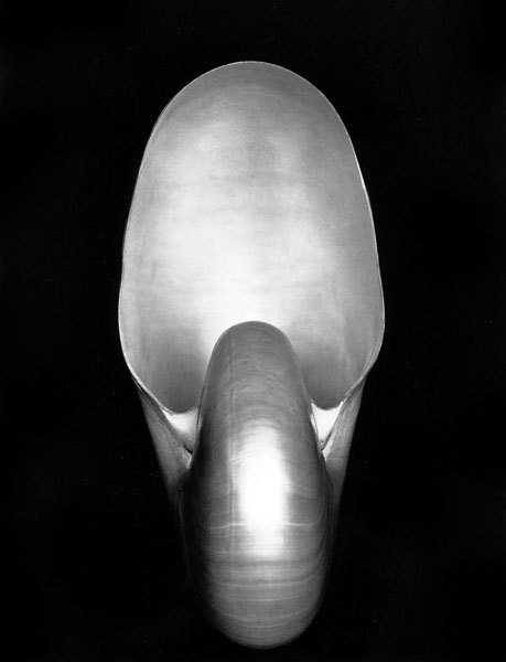 Edward Weston, Shell, 1927