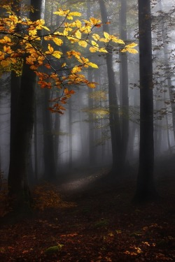 lori-rocks: Misty forest by Kristjan Rems