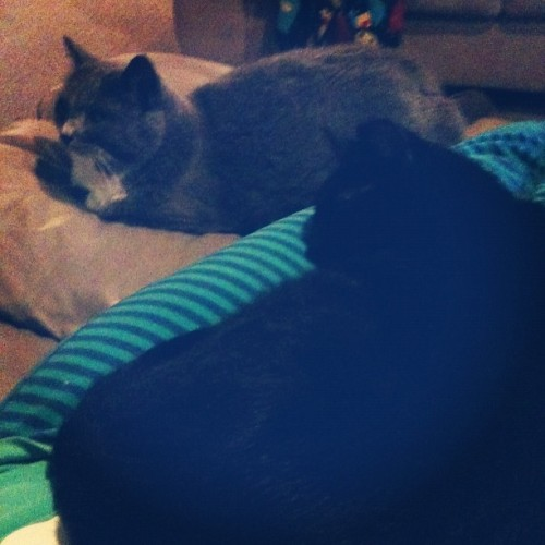 The kitties and I are watching some TV. :)  (Taken with Instagram)
