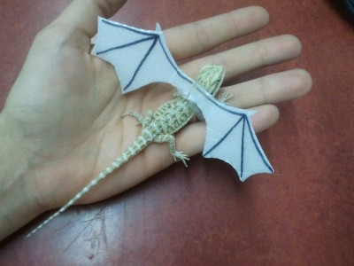 death-by-lulz:  fifthbase: SO I PUT PAPER WINGS ON THIS BABY BEARDED DRAGON AND NOW IT'S JUST A DRAGON  Be sure to follow this blog, it'll look great on your dashboard