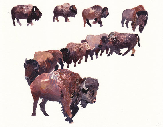 "$40Bison HerdMichelle Morinarchival print, signed11"" x 14"" make it mine"