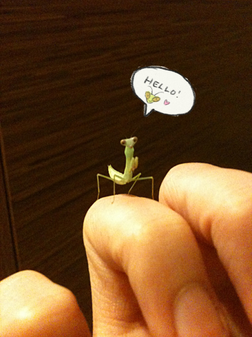 And here is one of my mantis babies. (◡‿◡✿)