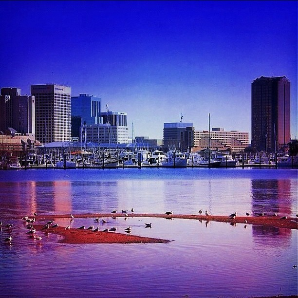 no fuck.. #norfolk #757 #elizabethriver #blue #seagulls #city #skyline #view (Taken with Instagram)