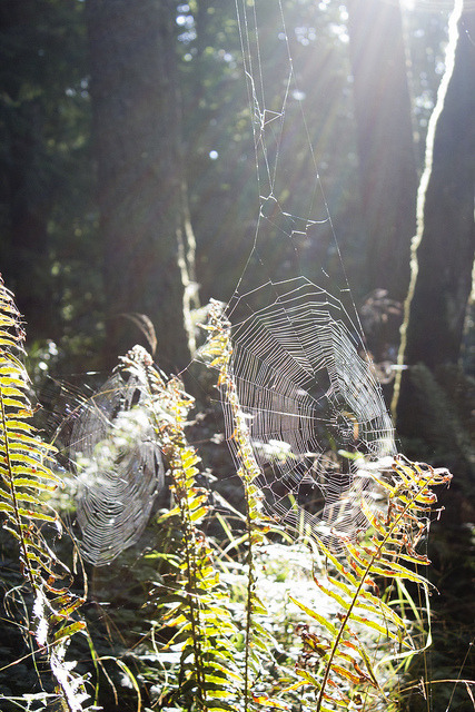 Sunlit Spiderwebs on Flickr.