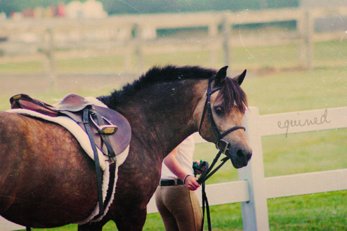 equined:  This pony was my favoriteee