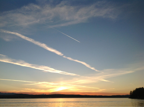 "These contrails  are from jets heading north west over Vancouver Island, from Seattle, Vancouver, who knows, going to the orient. Weekday evenings around seven o'clock. As they disperse in the high windflows they smudge and separate and form shapes like ghostly Japanese ideograms.  I am fated to live in places under flight paths. In Norfolk the sound and sight of jets flying high, all day but particularly in the morning, coming from their trans-Atlantic flights and beginning their descent into Amsterdam Schiphol was ever-present. I remember once flying in from Toronto on an overnight flight and seeing the coast of North Norfolk, Blakeney Point, etched clearly, thousands of feet below me.  The words of Joni Mitchell's song haunt me. I wonder whether, torn between two homes and two cultures and linked by long flights crossing back and forth through time zones and over vast separations, I am not like the singer. ""I was driving across the burning desert  when I spotted six jet planes  leaving six white vapor trails  across the bleak terrain.  It was the hexagram of the heavens  It was the strings of my guitar  Amelia, it was just a false alarm. The drone of flying engines  is a song so wild and blue.  It scrambles times and seasons  if it gets through to you.  Then your life becomes a travelogue  of picture postcard charms,  Amelia, it was just a false alarm  ……….  Maybe I really never loved  I guess that is the truth  I've spent my life in clouds   at icy altitude  ……….  People will tell you where to go  They'll tell you where they've gone  But til you get there yourself you never really know  Where some have found their paradise  others just come to harm  ……….  I slept on the strange pillows  of my wanderlust  I dreamed of 747s   over geometric farms,  Dreams, Amelia, dreams and false alarms.""  (Edited from Joni Mitchell's song 'Amelia' from the album 'Travelogue')          ©"