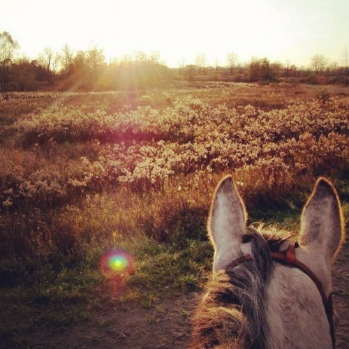 horsesandcoffee:  sigh if only things could be like how they were this day