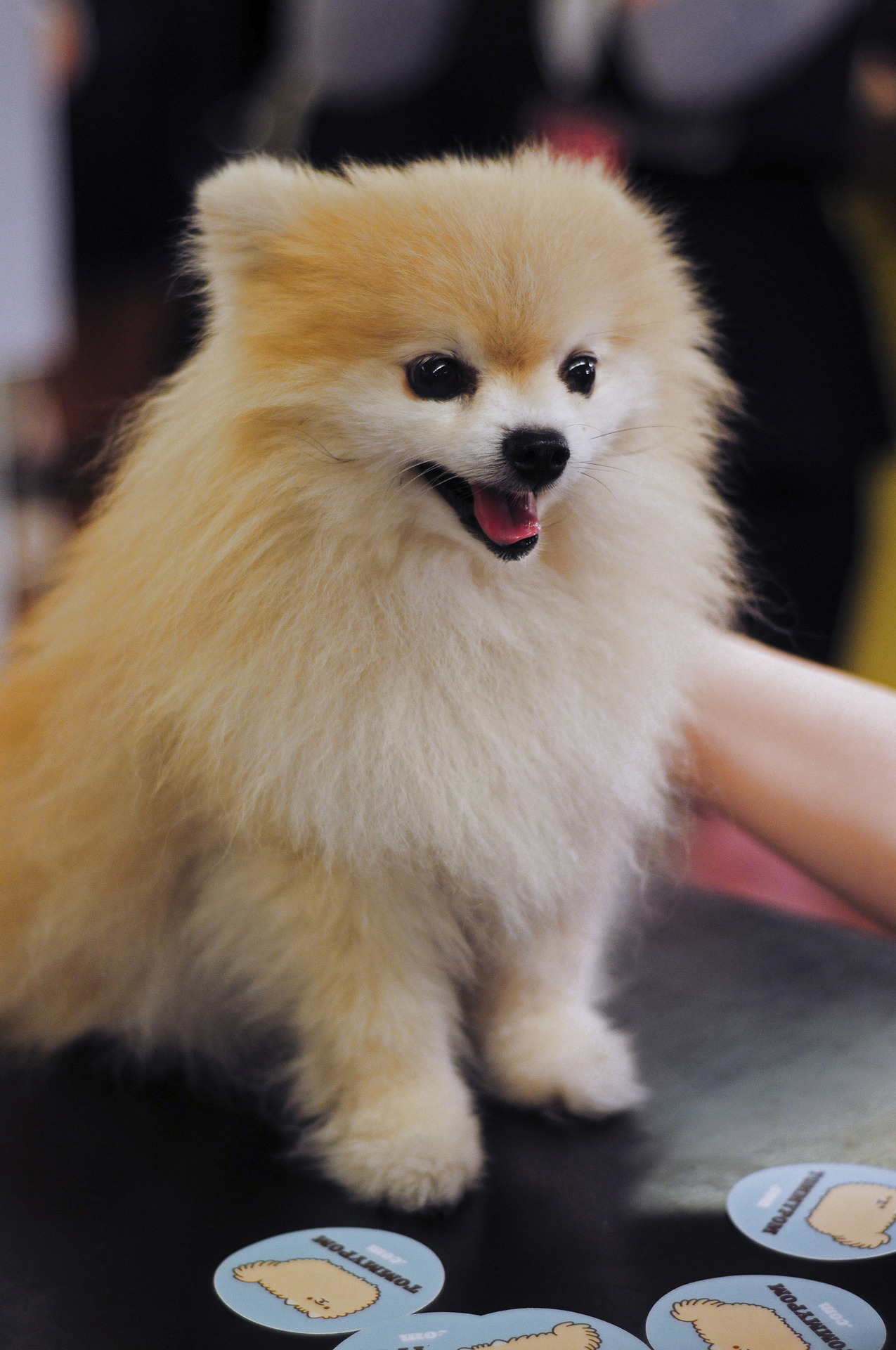 livinginthestills:  Tommy Pom at the 111th Anniversary of Bergdorf Goodman!