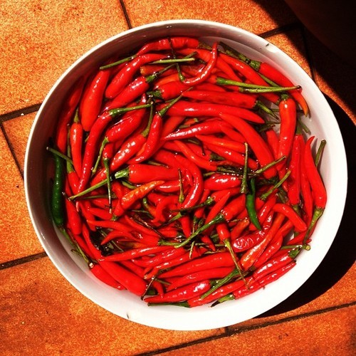 The World's Hottest Peppers! Check Them Out Here!