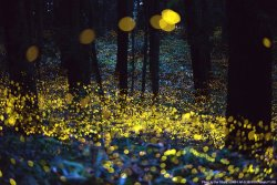 Long exposure of fireflies just before dark - Imgur