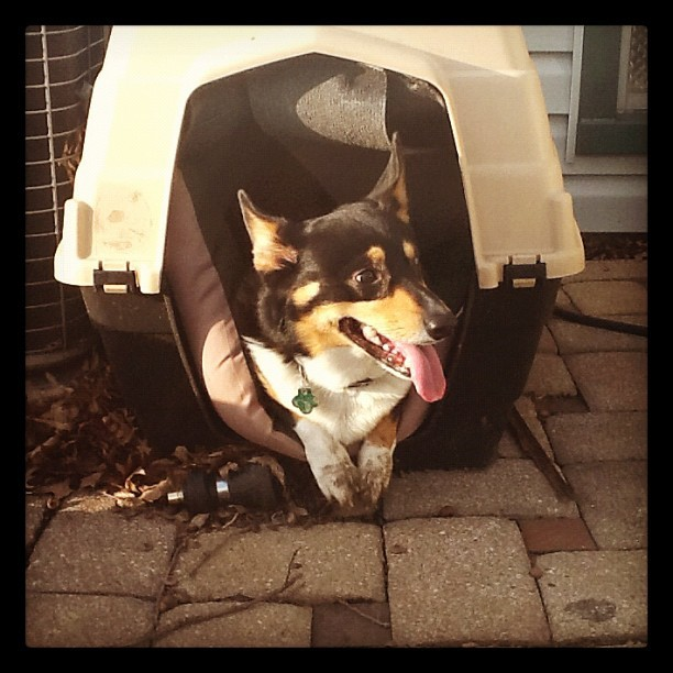 Miss my pup! #corgi (Taken with Instagram)