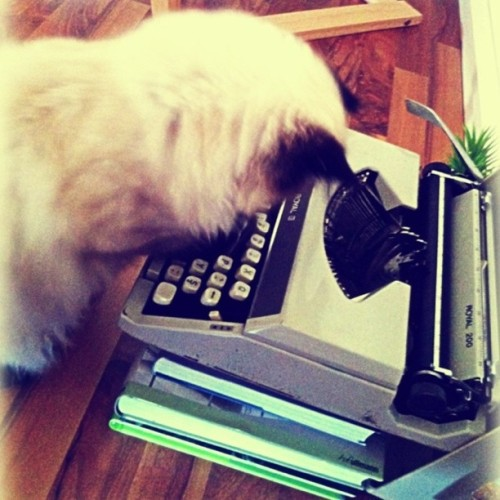 He is trying to use the typewriter…so funny;)#cat#catlovers#typewriter (Wurde mit Instagram aufgenommen)