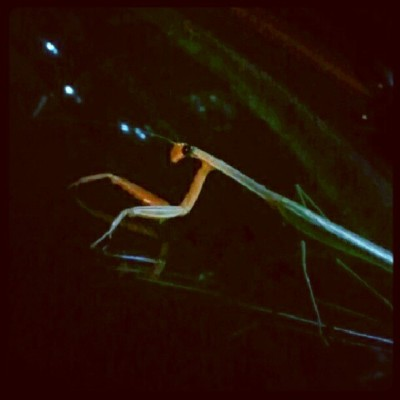 Kind of a #bad #picture but a #mantis was #sitting on the #wipers of a #car. #photo #cool #bugs #chillen #bored #life #random #work #night #time #green  (Taken with Instagram)