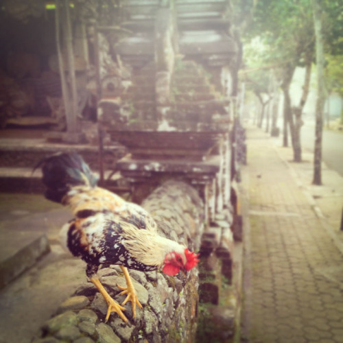 (via From the road… Week two in Bali)