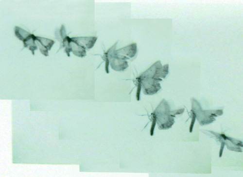 Visual response. Butterflies at Thakoon SS 2013.