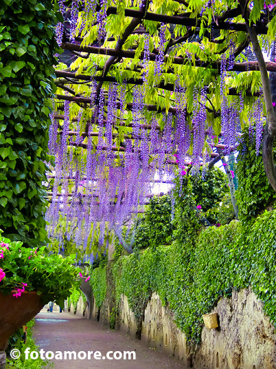 """Wisteria Lane"" Ravello, Campania    We arrived on the Amalfi Coast, thinking early spring would be an ideal time to photograph the beauty of the area.  It turned out that Italy was having a warm sunny spring but that wasn't the case along the Amalfi, especially during our week in Ravello.  The rains were hard, making it impossible to do more than seek shelter.  As soon as the rain would lighten up, we would dash down the hill from our hotel to the Villa Rufalo in hopes that the rain would stop and we could photograph the gardens and views, all the while hoping to catch the perfect light.  We'd also go the other direction from our hotel to the path that led to the Villa Cimbrone.  We were cut short on two occasions due to rain, but kept at it until we finally had a break in the weather. Villa Cimbrone was originally built on a plateau in the 11th century and came under many hands throughout  the centuries, including the church becoming a monastery.  Under different ownership yet again, the villa and gardens were updated in the 19th and 20th centuries.  The current villa, a luxury hotel and the park were ""updated"" with statues, fountains, temples and nymphaea, adding the romanticism of the Middle Ages to the property.  Much of the ideas for the villa, gardens and park came from frequent guest and English gardener Vita Sackville-West of the Bloomsbury Set.   ""Wisteria Lane"" was taken looking through the Avenue of Immensity.  The stunning branches of wisteria blooms hanging like streamers through the pergola and were breathtaking.  Due to the rain's intensity, we walked on a carpet of various shades of lilac-colored petals our eventual encounter with Ceres in her temple.  At the end of this long covered walk, we finally came out into what should have been radiant sunshine but in fact was another gray horizon of sky and water somewhere in all that grayness.  We had reached the magnificent Terrace of Infinity."