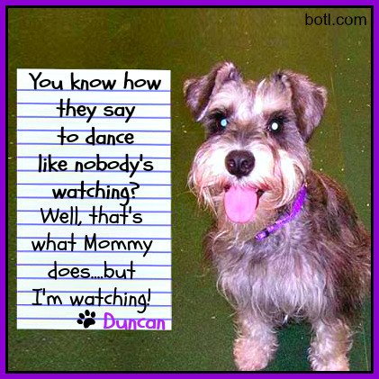 taleswagging:  TALES WAGGING:  Dance like nobody's watching?  My Mommy does that.  And I'm watching!