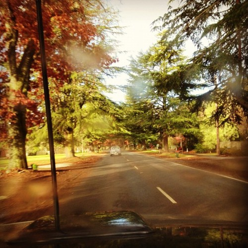 akky-breaky:  #beautifulscenery #roadtrip #toyotahilux #amazingcolours #trees #rainfall (Taken with Instagram)