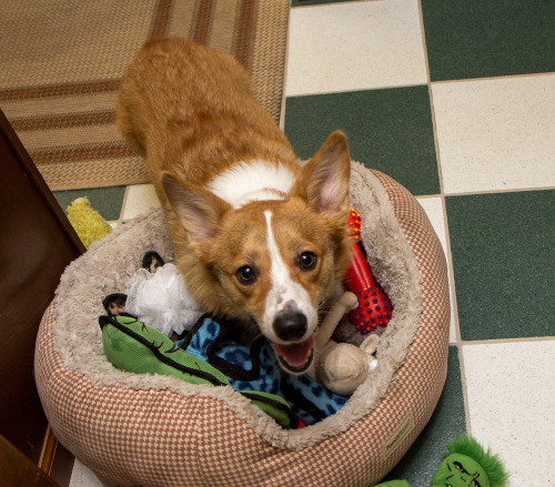 "otisthecorgi:  ""Hello MTV, this is my crib."""