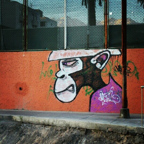 Monkeying around in Arequipa. #graff #peru (Taken with Instagram)