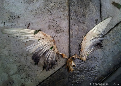 something lost a pair of wings (or a pair of wings lost something) Galaxy Note cameradefault Galaxy Note camera app  no editing done no more flying away now.