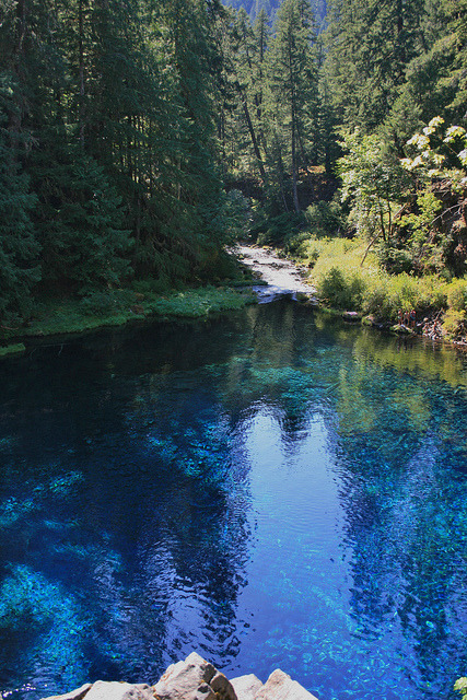 visitheworld:  Tamolitch Pool, the place where the McKenzie River naturally reappears from its underground channel into a crystal blue pool in Oregon, USA (by rich692).