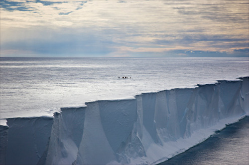"""Ross Island is abutted to the south by the Ross Ice Shelf, an area roughly the size of France. It is a remarkable experience to stand on Ross Island and look over the desolate flatness of the ice shelf. It gives real meaning to the term deafening silence. A blank canvas with no features, it still holds deep within its ice Scott, Wilson, Bowers and Oates who, with the exception of Oates, died at their last camp just 18 kilometers (11 miles) from One Ton depot. Known in the heroic age simply as 'the Barrier', the Ross Ice Shelf is immense.""  — from the introduction to Still Life: Inside the Antarctic Huts of Scott and Shackleton, Jane Ussher and Nigel Watson, Antarctic Heritage Trust (photo by Sue Flood, via BBC - Viewfinder: In conversation with wildlife photographer Sue Flood)"