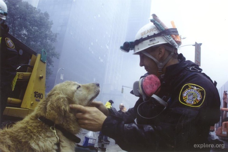 dogblessusa:  Today we're thinking of those who lost their lives on 9/11, and remembering the brave search dogs and their handlers who sought survivors. This is our video tribute to the men, women, and canines who deserve recognition.