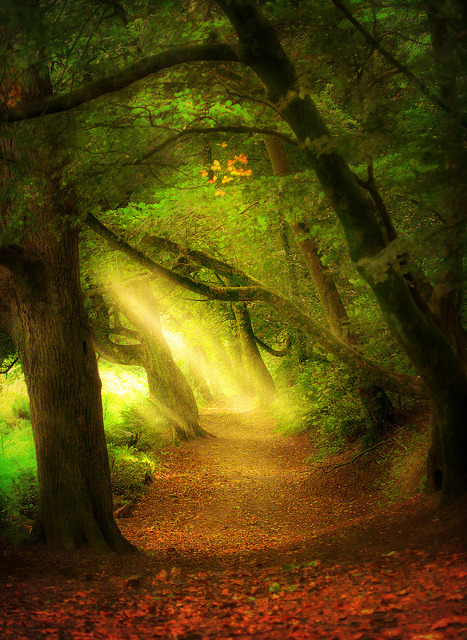 bluepueblo:  St. Catherine's Wood, England photo via kdnet