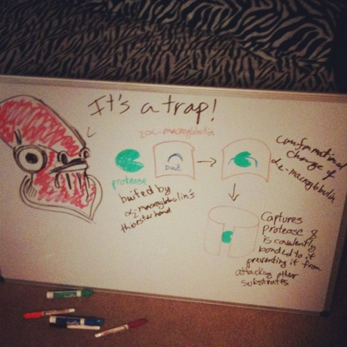 This is how I study for #immunology #starwars #itsatrap! #admiralackbar (Taken with Instagram)