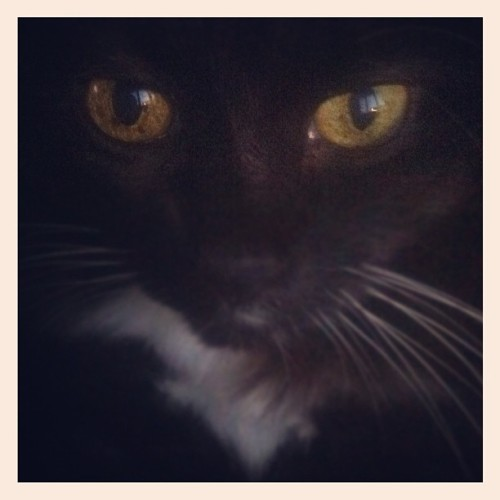 Have you ever seen a cat's eyes in the dark, and wondered what they were? (Taken with Instagram)
