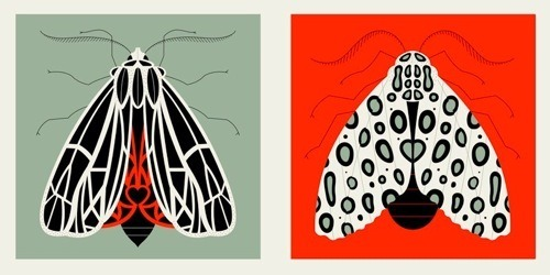 visualgraphic:  Pattern Insects