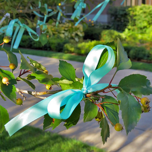 Tie a ribbon on a tree along Marquette University's Central Mall to honor survivors of sexual violence.